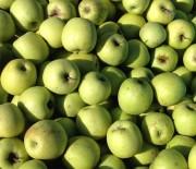 A Ceriano per raccogliere le mele