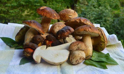 Funghi porcini e vino: coppia perfetta
