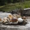 Funghi: come e dove comprarli