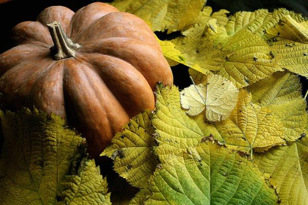 zucca con foglie