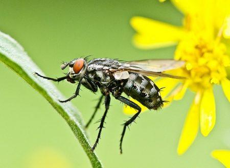 10 rimedi naturali per allontanare mosche e mosconi da casa
