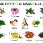 le piante odorose e le spezie che aiutano a vivere meglio