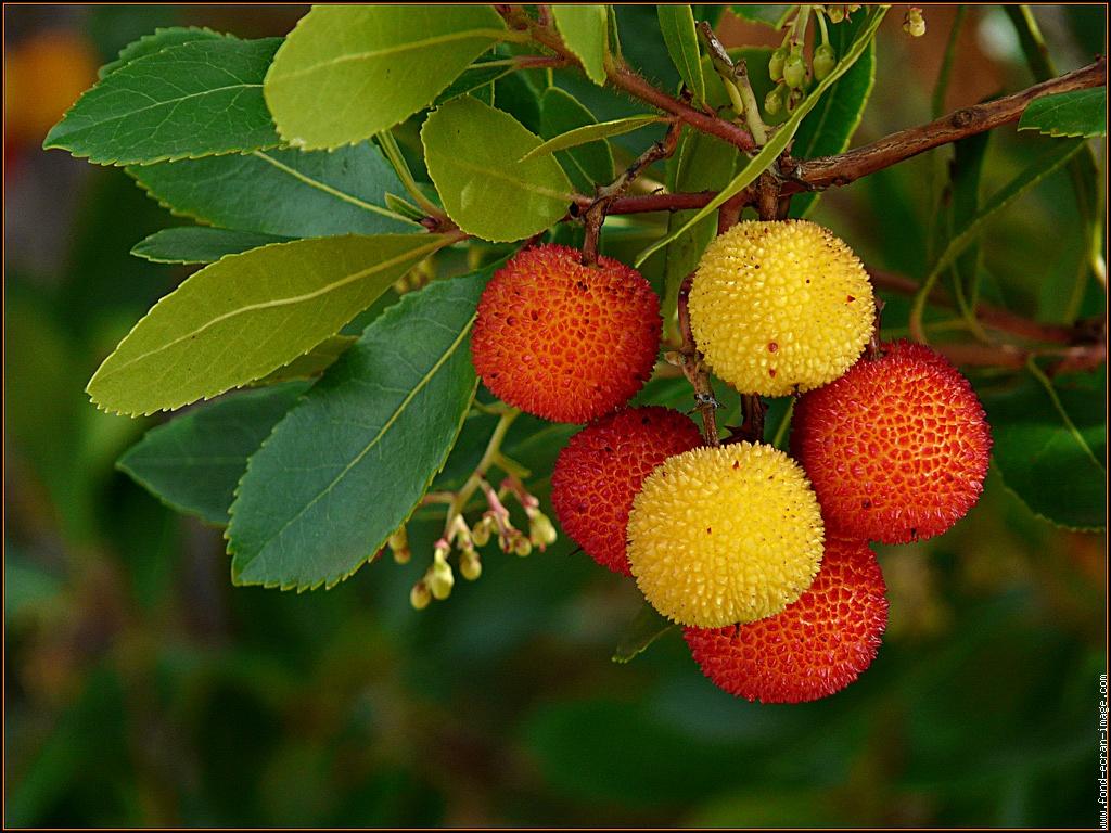 Frutti antichi e determinati