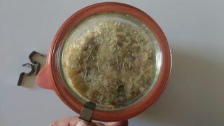 tortino di zucca in vasocottura al microonde