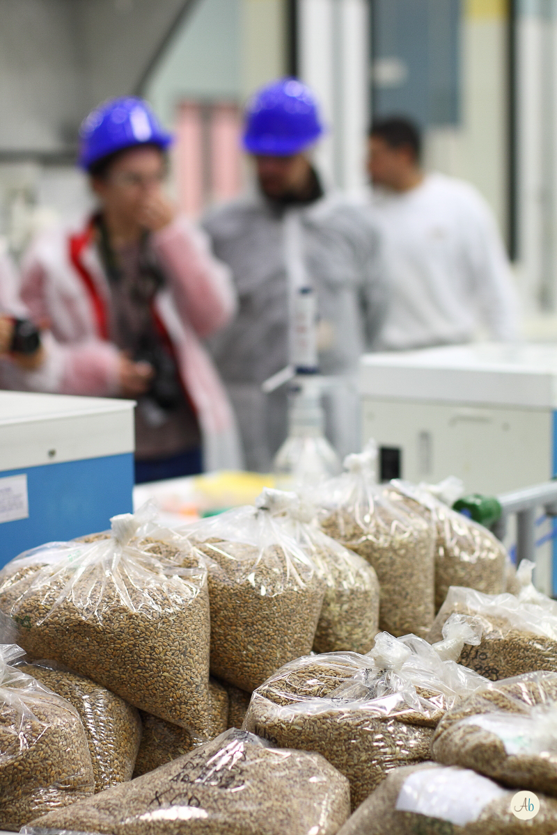 La farina di grano tenero