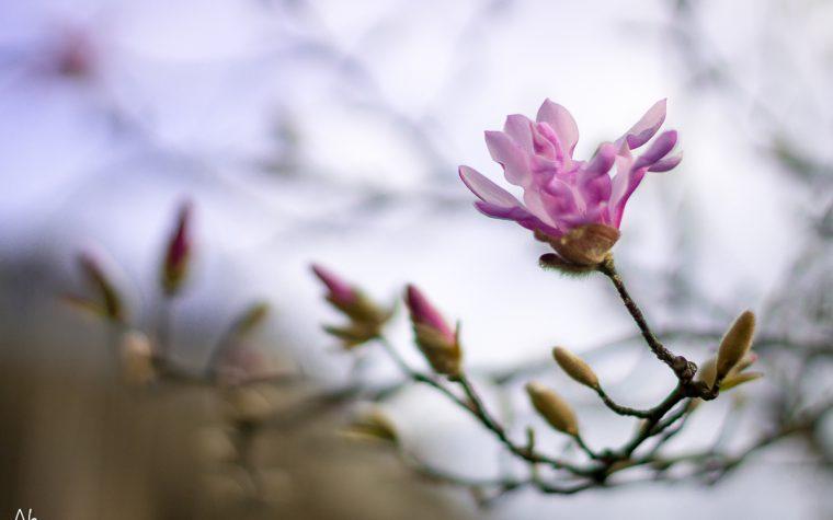 Marzo – primavera