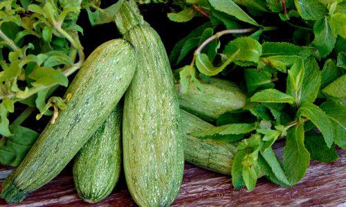 Le  zucchine e le sue proprietà