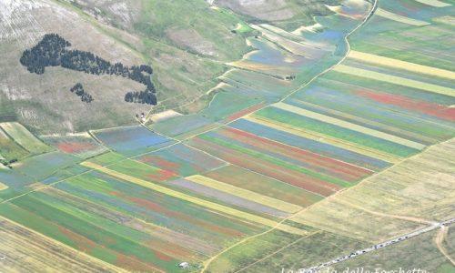AVIOTURISMO – La fioritura di Castelluccio di Norcia