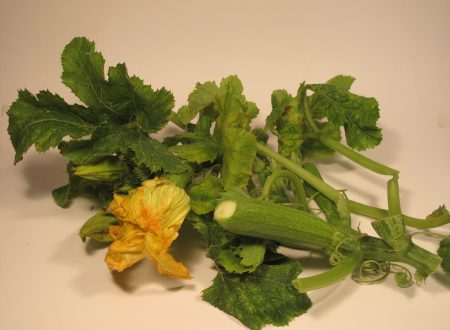 Talli di zucchine o taddhi in umido