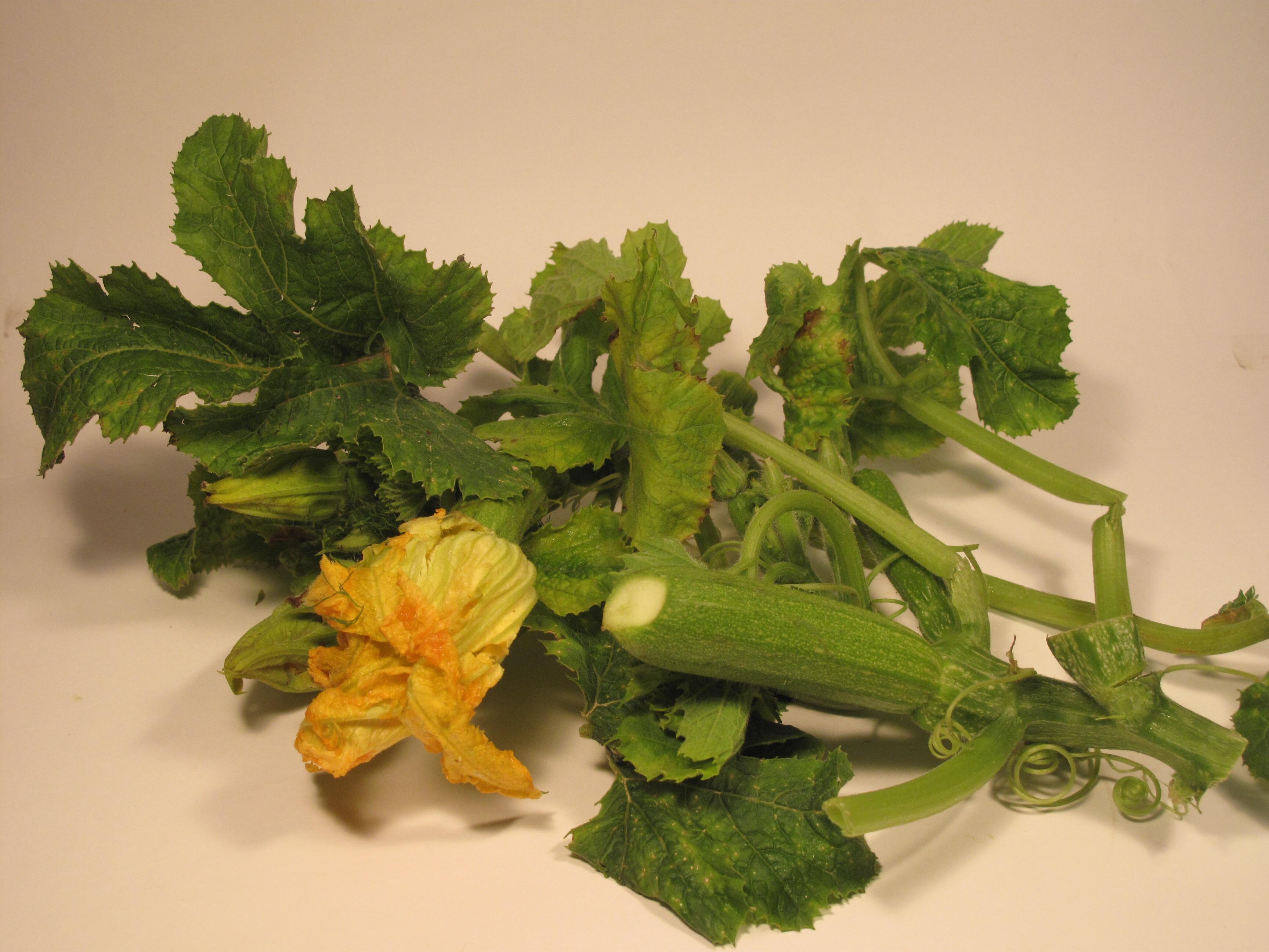 Ricerca ricette con zucchine in umido for La zucchina