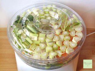 dado granulare vegetale coperchio