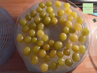 uva essiccata inizio
