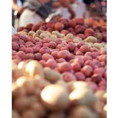 Patata rossa di Colfiorito - per la foto si ringrazi