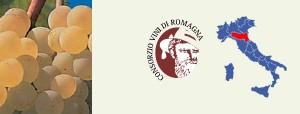 Albana di Romagna D.O.C.G. - per la foto si ringrazia