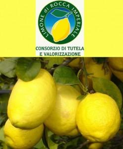 Limone di Rocca Imperiale I.G.P. - per la foto si ringrazia