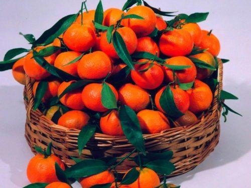 Clementine del Golfo di Taranto – I.G.P.