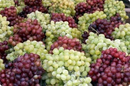 Uva di Puglia – I.G.P.