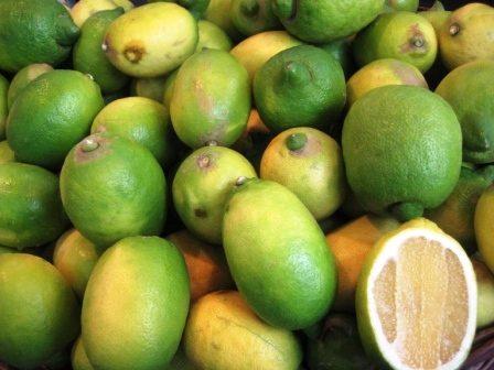 Limone interdonato di Messina Jonica – I.G.P.