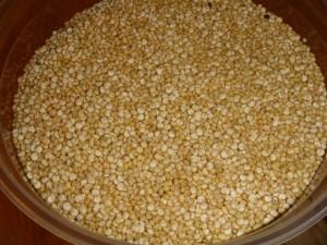 Quinoa - per la foto si ringrazia