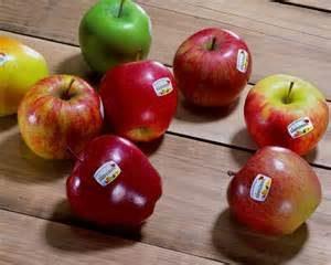 Mela Alto Adige – Sudtiroler Apfel – I.G.P.