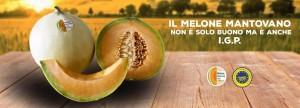 Melone Mantovano I.G.P. - per la foto si ringrazia