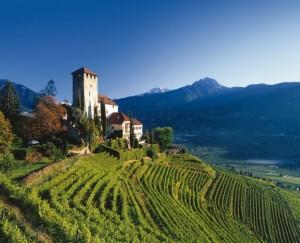 Vigneti Alto Adige - per la foto si ringrazia