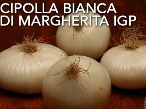 Cipolla bianca di Margherita – I.G.P.