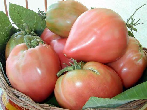 Pomodoro di Belmonte – P.A.T.