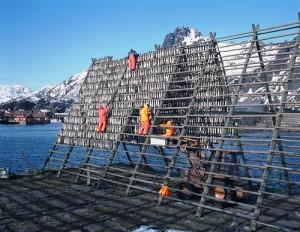 Hjell norvegese per essiccare il merluzzo