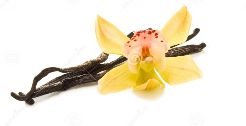 http://www.dreamstime.com/stock-photography-orchid-vanilla-image13426842