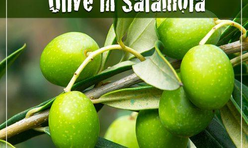 Madama Oliva ci svela la ricetta della Salamoia perfetta