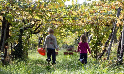 Conto alla Rovescia per Vinotondo