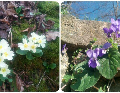 I fiori eduli o commestibili