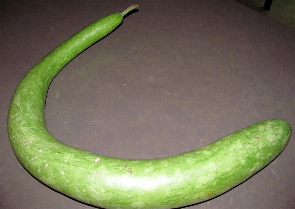 Cucuzza zucchina alla siciliana for La zucchina