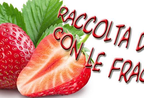 Raccolta ricette dolci con fragole