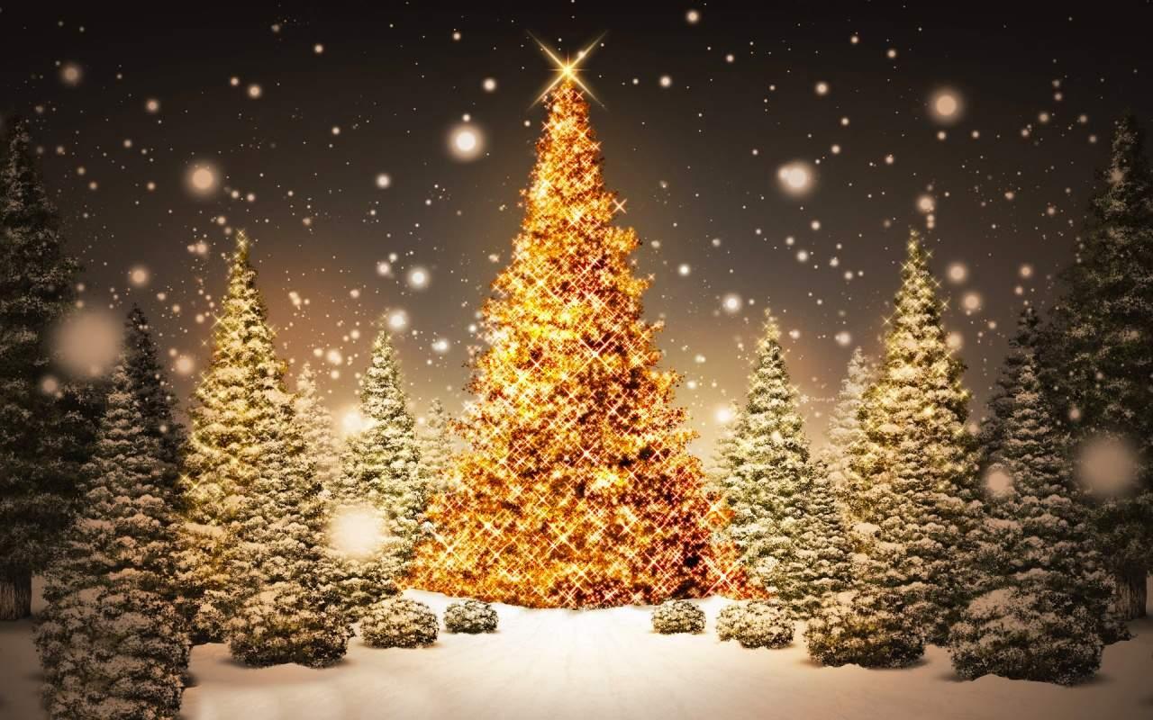 Immagine Di Natale Foto.Albero Di Natale 1 Cucina Per Caso Con Amelia