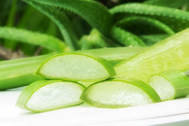 Aloe, la pianta della guarigione | Cucina con le Sorelle Russo