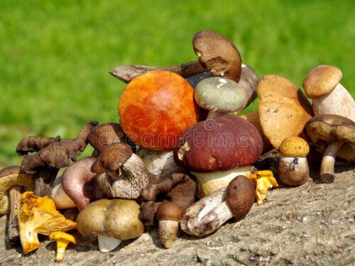 Torta  salata vegetariana al profumo di bosco con funghi e taleggio