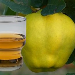 Liquore casalingo Mele Cotogne
