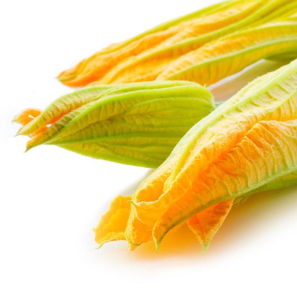 ricette sfiziose con i fiori di zucca