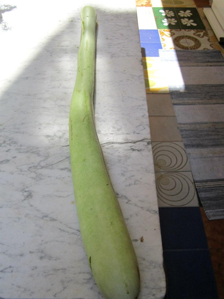 Risotto con zucchina lunga di francesco for La zucchina