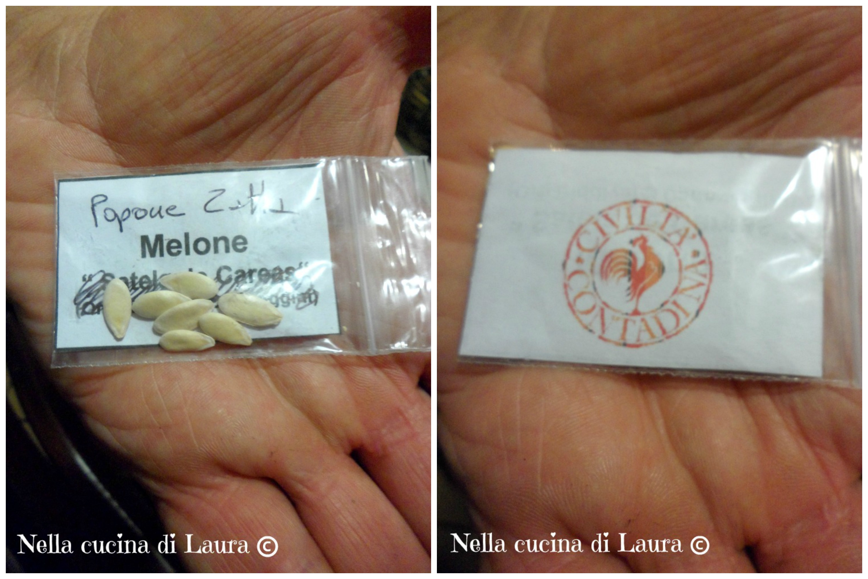 melone zatta - nella cucina di laura