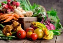Raccolta ricette vegetariane in formato pdf