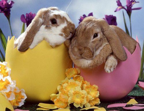 Ricette per Pasqua e Pasquetta in formato Pdf