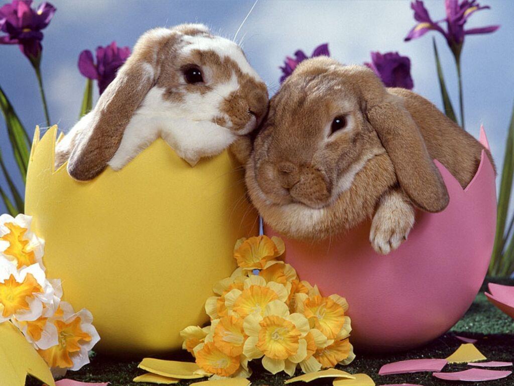 pasquale Ricette per Pasqua e Pasquetta in formato Pdf