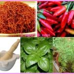 Vocabolario e utilizzo delle erbe in cucina