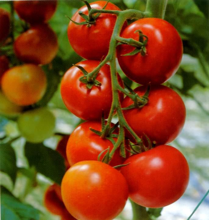 Fatti bella con il pomodoro