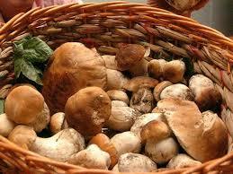 Ricette a base di funghi