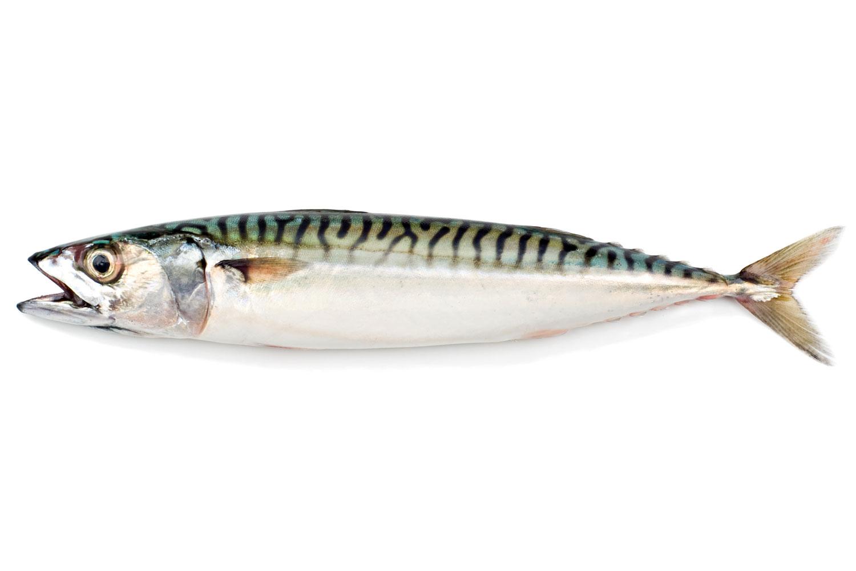 Come lessare vari tipi di pesce for Grosso pesce di lago