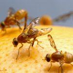 Come allontanare i moscerini dalle nostre cucine